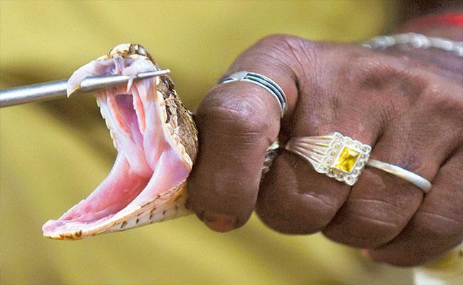 Woman Expire Of Snakebite In Kerala - Sakshi