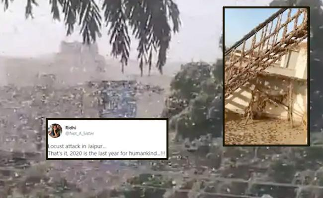 Terrifying Videos: Locust Swarms On Jaipur Terrace - Sakshi