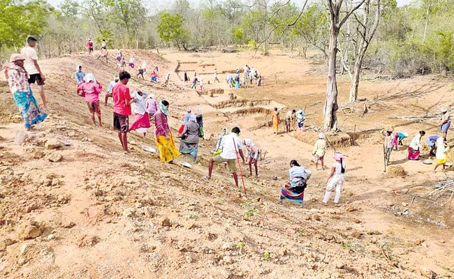 Opportunities For Tribes To Restoration Of Forests By Telangana Forest Department - Sakshi