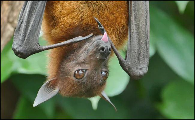 Dead Bats Found In Gorakhpur Tensions Panic Among Residents - Sakshi