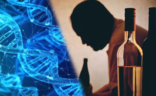 Alcoholism Could be Genetic: Study - Sakshi