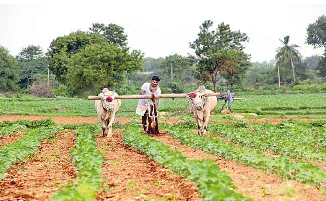 Telangana Govt Designed Monsoon Crops Map - Sakshi