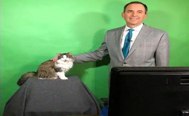 The Cat Disturbs Weatherman Report Becomes Internet Sensation - Sakshi