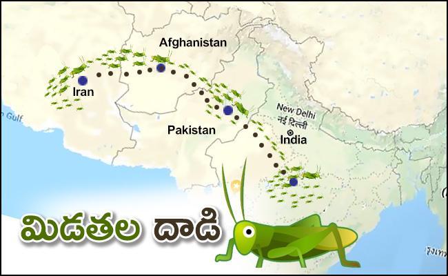 Locust Attack in India: locust swarms needs pakistan help - Sakshi