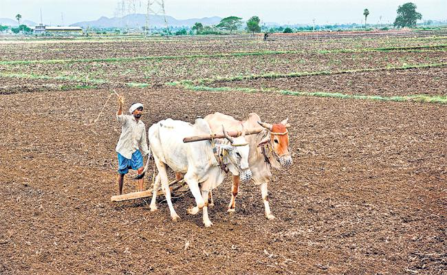 Cultivation is much larger than the last Kharif cultivation in AP - Sakshi