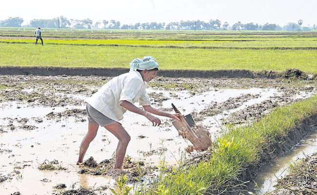 First aid Raithu Bandhu to a Small Range Farmer - Sakshi