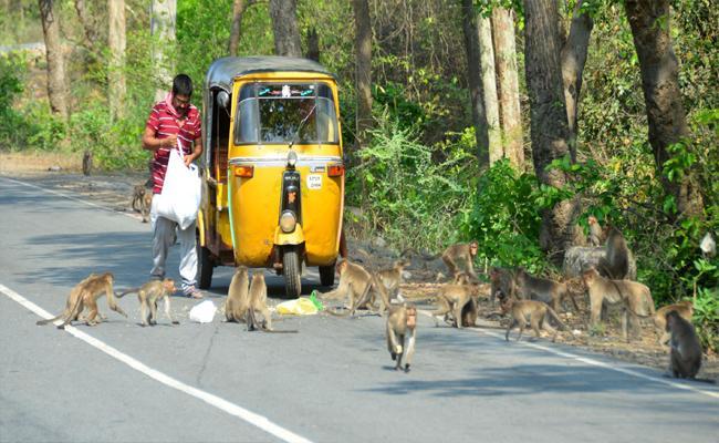 Auto Driver Helping Monkeys By Feeding Food During Lockdown - Sakshi