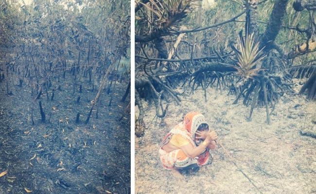 Fire In Cashew Garden In Srikakulam District - Sakshi