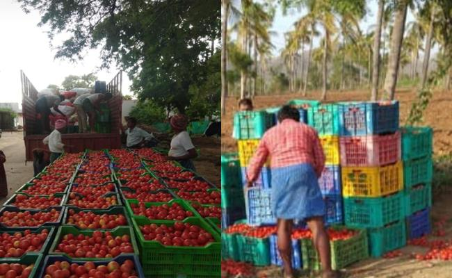 ATAFF helps farmers with Tomato Challenge initiative - Sakshi