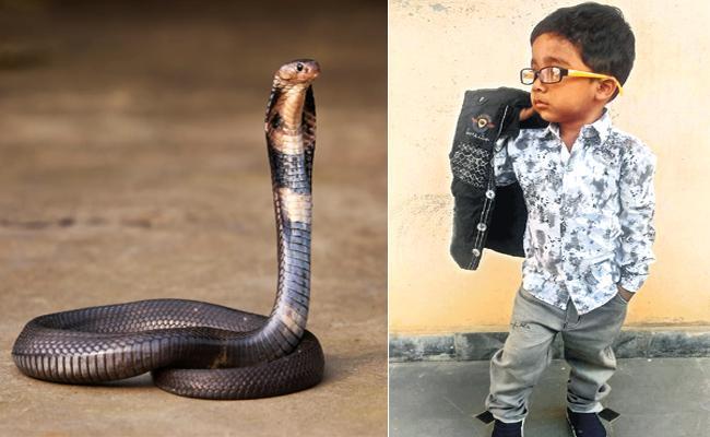Three Years Baby Boy Deceased With Snake Bite in Rangareddy - Sakshi