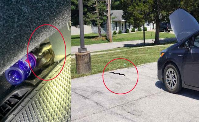 US Young Woman Scared After Watching Snake In The Car - Sakshi