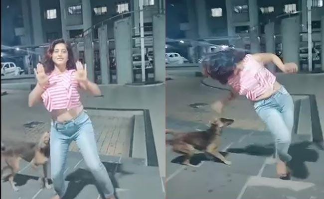 Watch Video How Dog Bites When Young Women Doing Tiktok  - Sakshi