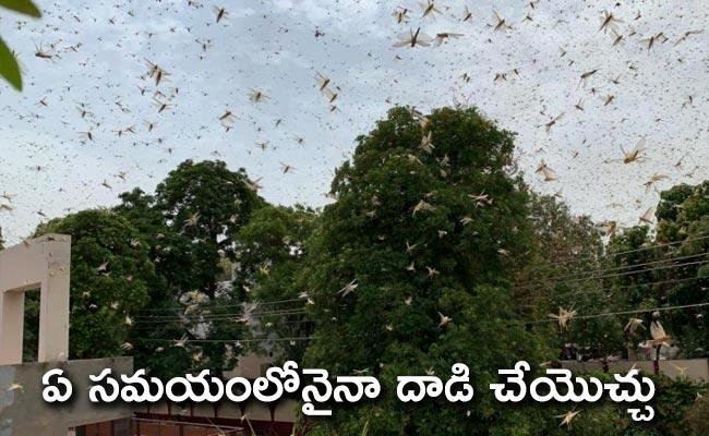 Swarms of Locust Attack Vast Areas In Gurgaon Near Delhi - Sakshi