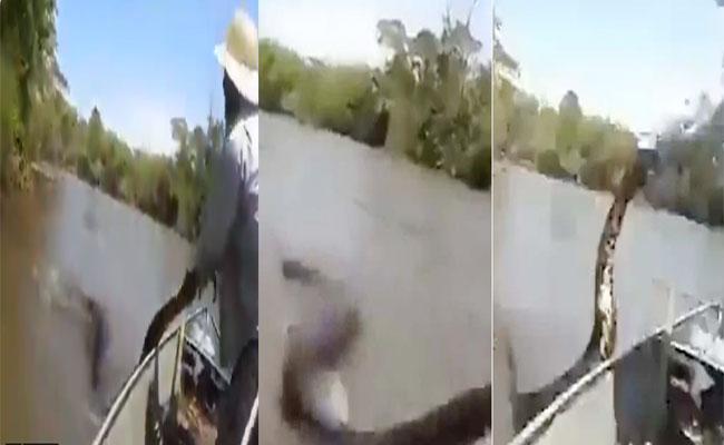 Man Trying To Pull Anaconda In Brazil Viral Video - Sakshi