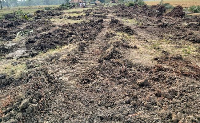Arrangements Are Being Made To Distribute Unfamiliar Public Lands - Sakshi
