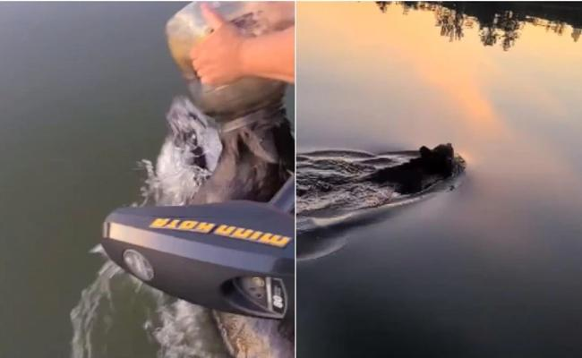Viral Video: Family Rescues Bear Cub Swimming With Jar Stuck On Its Head - Sakshi