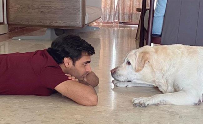 Bhuvneshwar Kumar Shares Adorable Pictures With His Dog - Sakshi