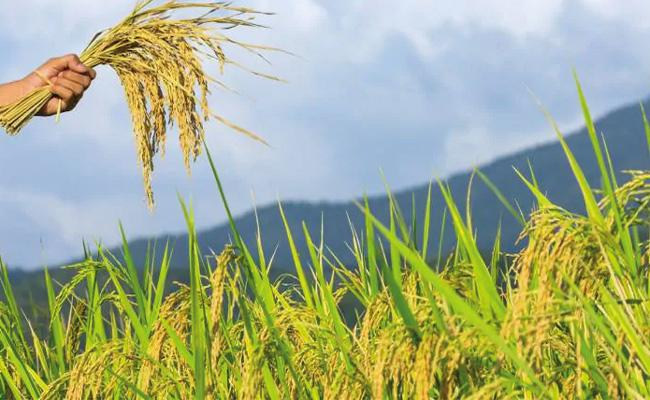 Telangana Agriculture Department Special Portal To Register Crops Details - Sakshi