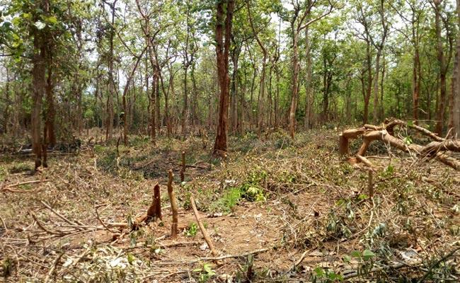 AP Government Arrangements For Distribution Of Forest Cultivation Rights Documents - Sakshi