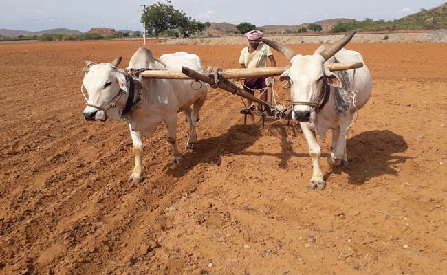 Corp Rental prices Demanding in villages Prakasam - Sakshi