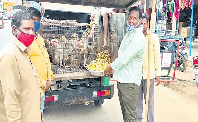 Special Teams Catching Monkeys in Rangareddy - Sakshi