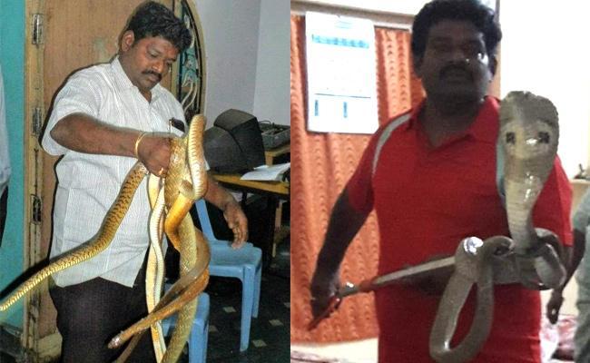 Special Story On Snake Catcher Kiran - Sakshi