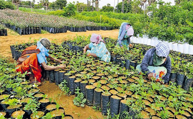 Everything is ready for the plant festival Vana Mahotsavam - Sakshi