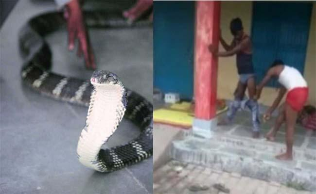 Snake Enters In Pant In Uttar Pradesh - Sakshi