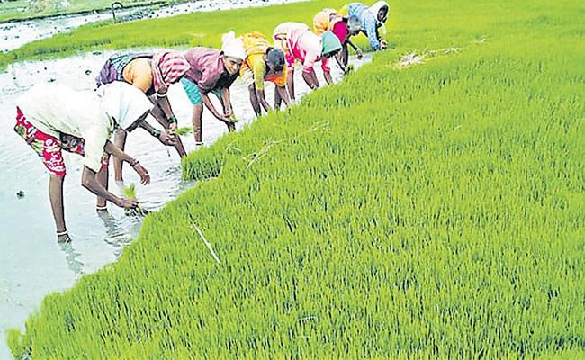 Demand for Agree laborers increased - Sakshi