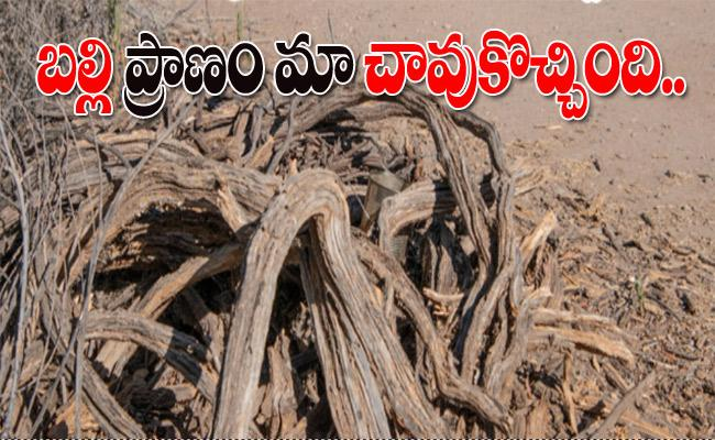 Find The Lizard On Tree In This Picture - Sakshi