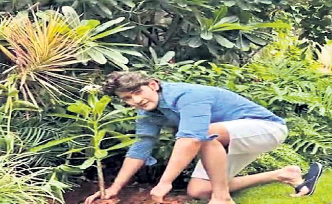 Mahesh Babu takes up green India challenge - Sakshi