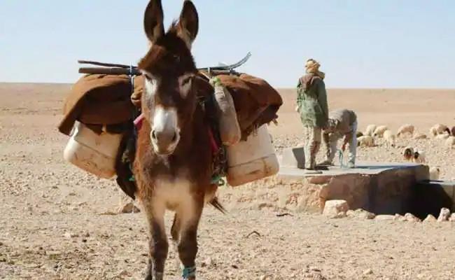 NRCE Will Start Soon Donkey Milk Dairy In Haryana - Sakshi