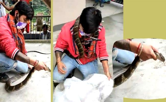 Huge King Cobra Captured In Nainital, Video Viral - Sakshi