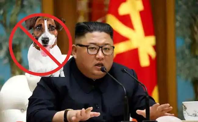 Kim Jong un Orders North Korea to Give Up Pet Dogs to For Meat - Sakshi