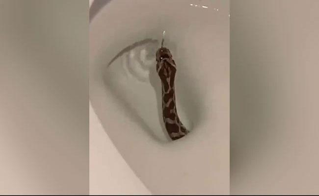 Viral Video: Shows Snake Emerging From Toilet In Texas - Sakshi