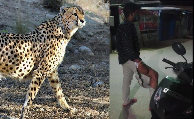 Cheetah Attacked On Scooters In Tirupati - Sakshi