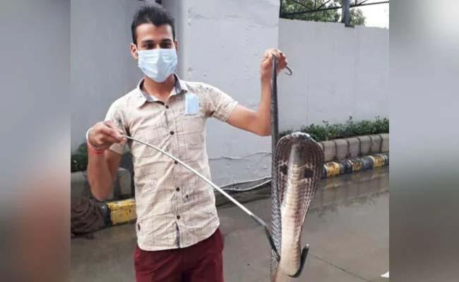 4 Feet Cobra Rescued From Metro Station In Delhi - Sakshi