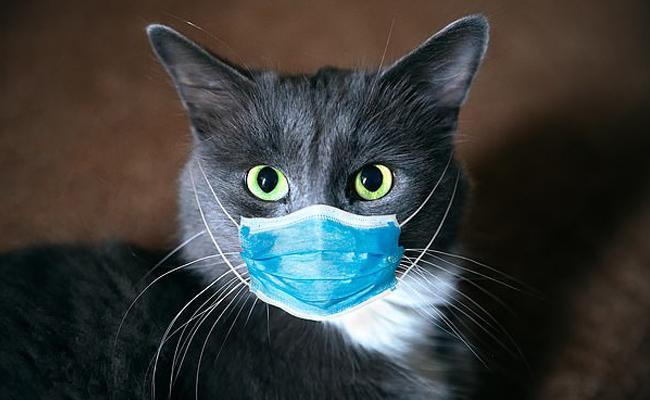 Wuhan Cats Got Corona Virus - Sakshi