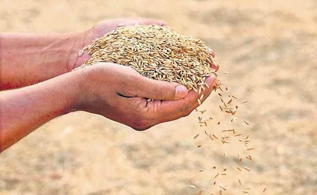 Kharif Crop Target Is 62 Lakh Metric Tonnes - Sakshi