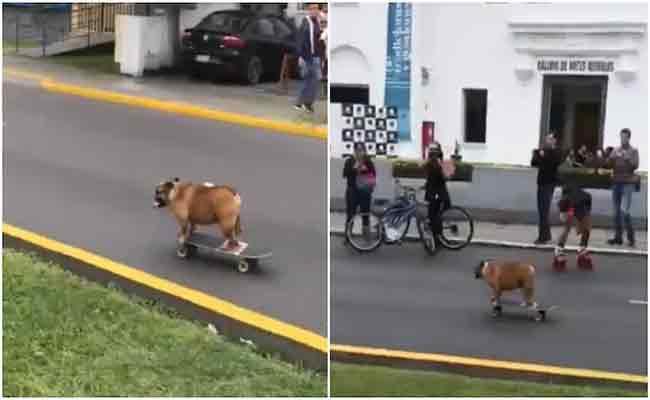 Dog Skateboard On A Street Video Trending In Social Media - Sakshi