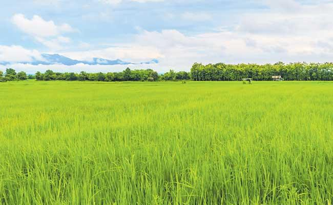 Total Cultivation In 11 Lakh Acres In Telangana - Sakshi