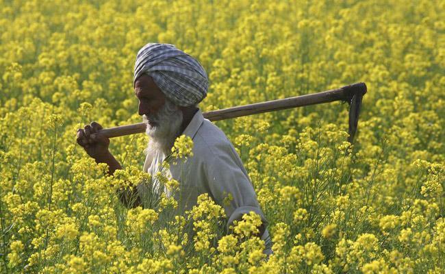 India Farming Sector Sees Green Shoots - Sakshi