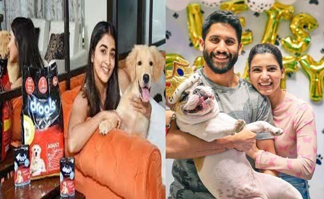 What Is The Names Of samantha Ana Pooja Hegde Pets - Sakshi