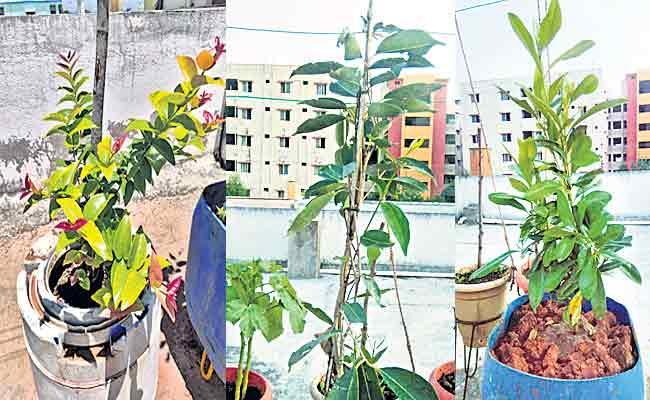 Telugu Teacher Doing Home Garden Farming In Sagubadi - Sakshi
