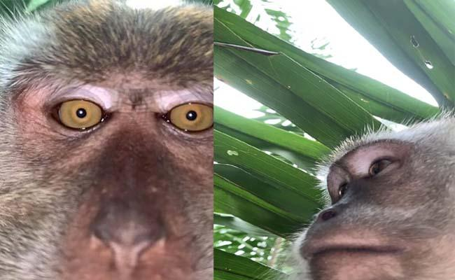 Monkey Steals Phone, Takes Selfies And Videos In Malaysia - Sakshi
