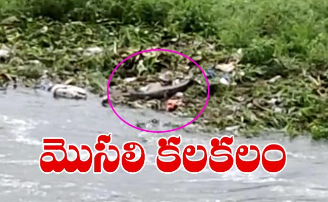 Crocodile In The Flood Water At Old City In Hyderabad - Sakshi