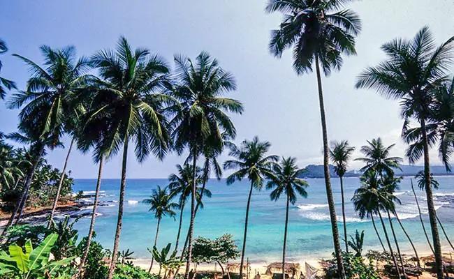 Srilankan Minister Climbs Tree For Coconut Shortage Problem - Sakshi