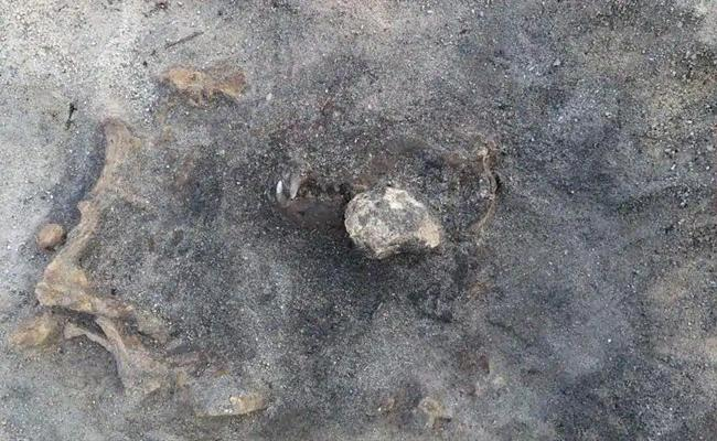 8400 Years Old Dogs Remains Found In Sweden - Sakshi