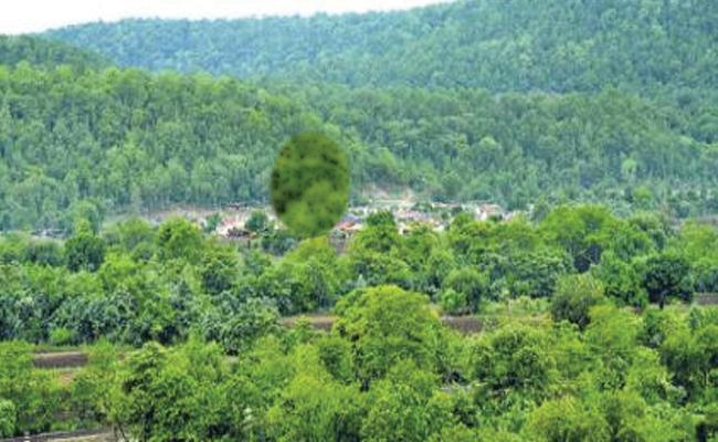 Greenery Increased In Telangana - Sakshi