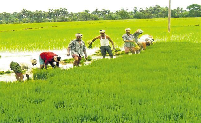 Kharif already has crops on above 30 lakh hectares - Sakshi